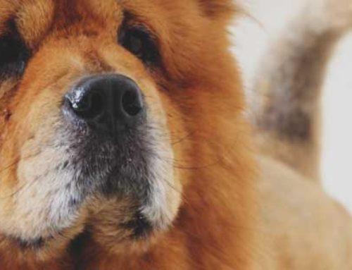 Il tuo cane o gatto è sovrappeso? Valuta il suo BCS (Body Condition Score)