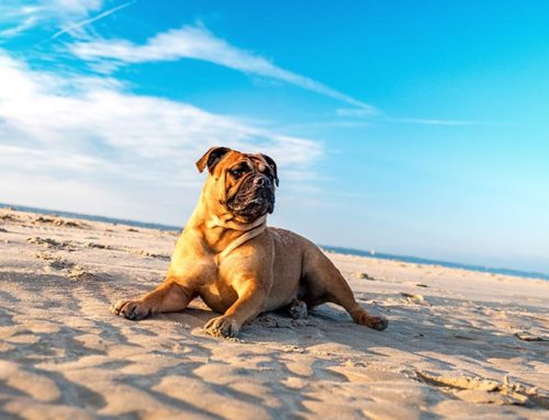 Che caldo che fa: come proteggere i nostri animali dal colpo di calore?