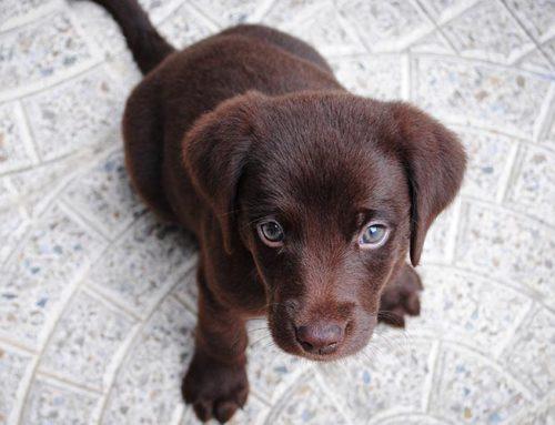 Il tuo cane mangia le feci? Cosa vuol dire?