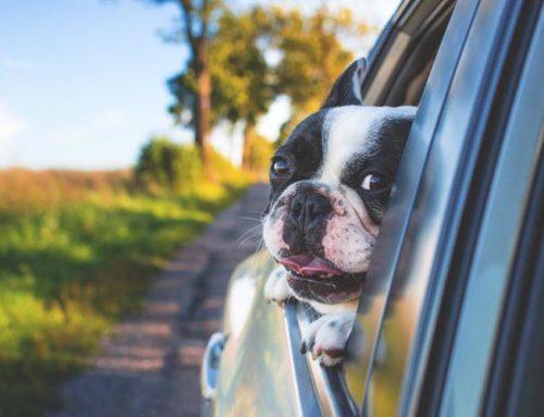 Come difendere i nostri cani dal caldo e dall'afa?