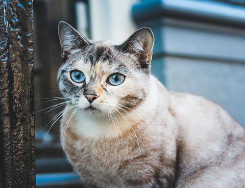 Devi far dimagrire il tuo gatto? Ecco 5 pratici consigli per te
