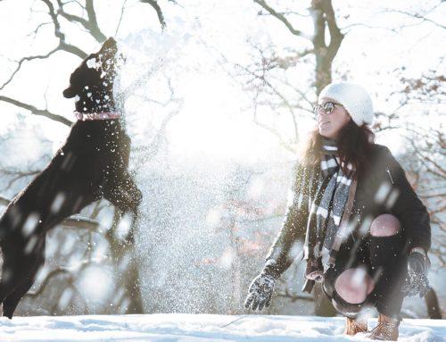 I cani soffrono il freddo?