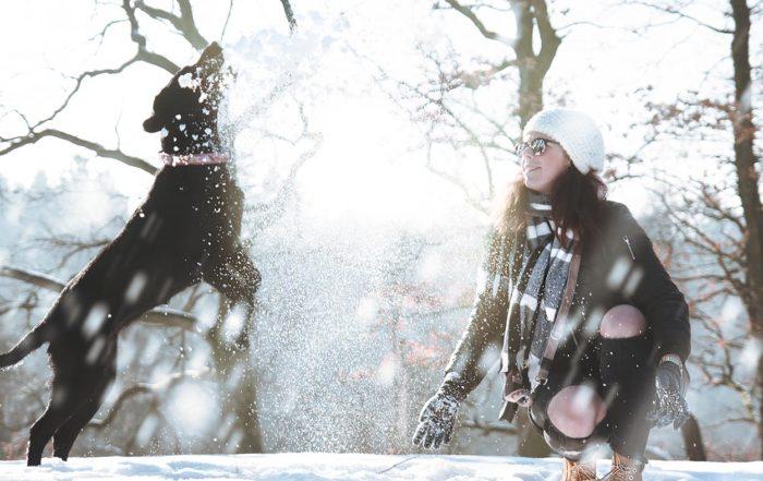 cani inverno freddo